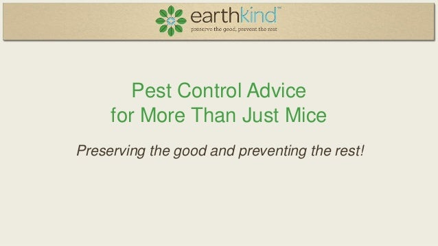 Pest Control Advice for More Than Just Mice