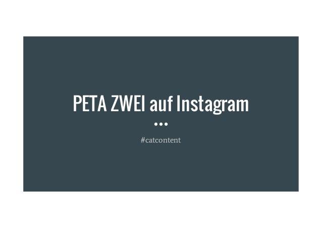PETA ZWEI auf Instagram #catcontent