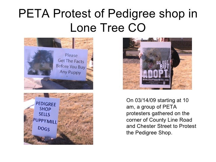 PETA Protest of Pedigree shop in Lone Tree CO On 03/14/09 starting at 10 am, a group of PETA protesters gathered on the co...