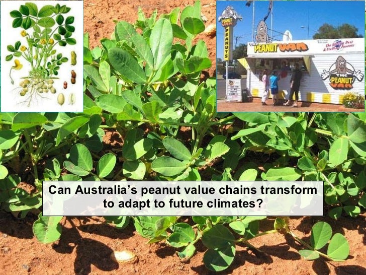 Can Australia's peanut value chains transform to adapt to future climates - Peter Thorburn