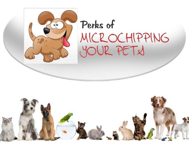 Perks of Microchipping your Pets
