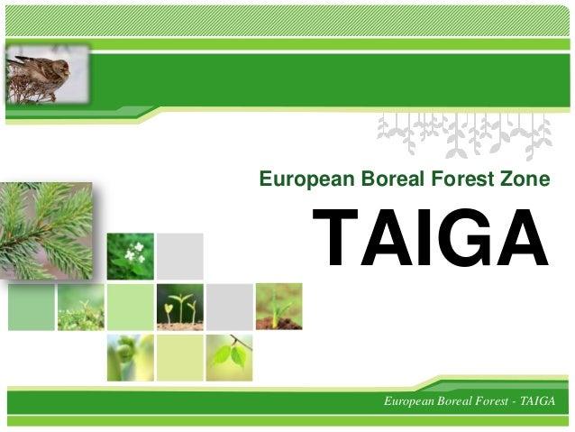 L/O/G/O          European Boreal Forest Zone              TAIGA                     European Boreal Forest - TAIGA