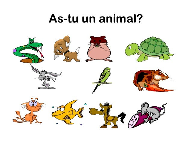 As-tu un animal?