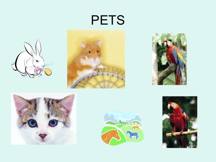 Pets 2n a