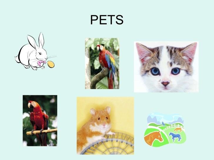 Pets 2n b