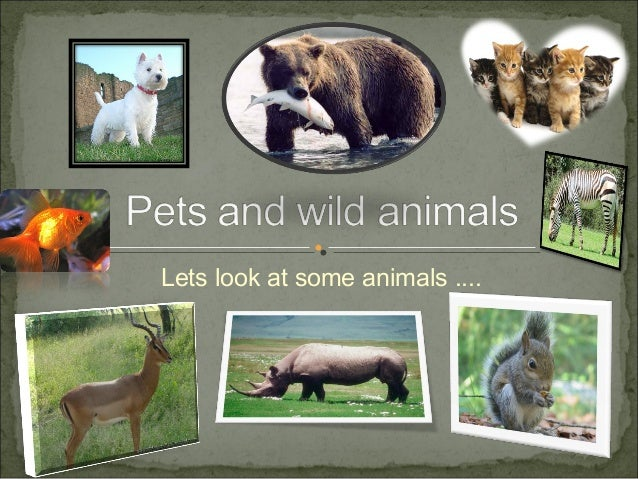Pets and wild_animals