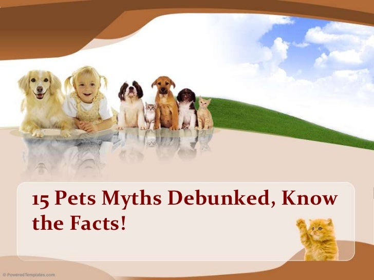 Pets Myths Debunked, Know the Facts