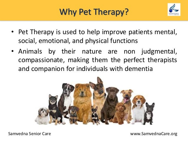 How Animal Therapy Helps Dementia Patients