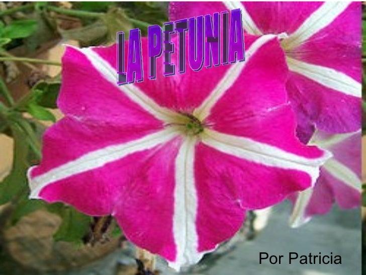 Por Patricia LA PETUNIA