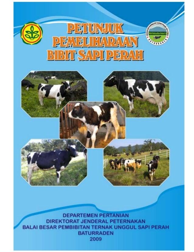 Petunjuk pemeliharaan-sapi-perah