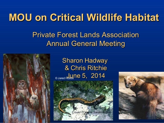 MOU on Critical Wildlife HabitatMOU on Critical Wildlife Habitat © Jared Hobbs Burrowing Owl Private Forest Lands Associat...