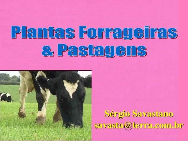 Sérgio Savastano savasta@terra.com.br