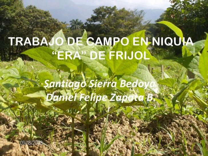 """TRABAJO DE CAMPO EN NIQUIA     """"ERA"""" DE FRIJOL     Santiago Sierra Bedoya     Daniel Felipe Zapata B."""