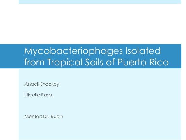 Mycobacteriophages Isolatedfrom Tropical Soils of Puerto RicoAnaeli ShockeyNicolle RosaMentor: Dr. Rubin