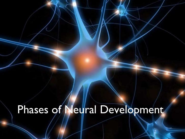 <ul><li>PHASES OF NEURAL DEVELOPMENT IN LEARNING </li></ul>Phases of Neural Development