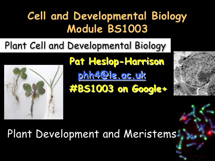 Cell and Developmental Biology             Module BS1003Plant Cell and Developmental Biology              Pat Heslop-Harri...