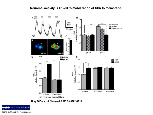 Neuronal activity is linked to mobilization of trkA to membrane.Bray G E et al. J. Neurosci. 2013;33:8202-8215©2013 by Soc...