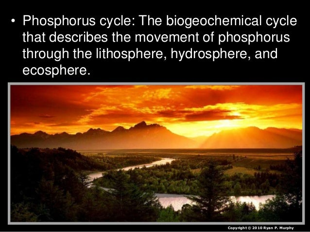 • Phosphorus cycle: The biogeochemical cycle that describes the movement of phosphorus through the lithosphere, hydrospher...