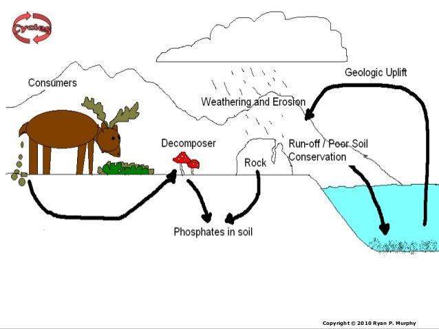 Easy Phosphorus Cycleon Basic Carbon Cycle Diagram