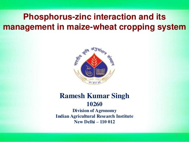Phosphorus-zinc interaction and its management in maize-wheat cropping system Ramesh Kumar Singh 10260 Division of Agronom...