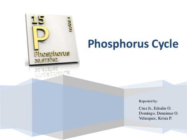 Reported by: Cruz Jr., Edralin O. Domingo, Dennimar O. Velasquez, Krisia P. Phosphorus Cycle