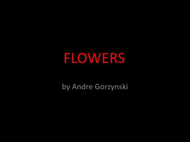 Photo Album<br />by Andre Gorzynski<br />FLOWERS<br />