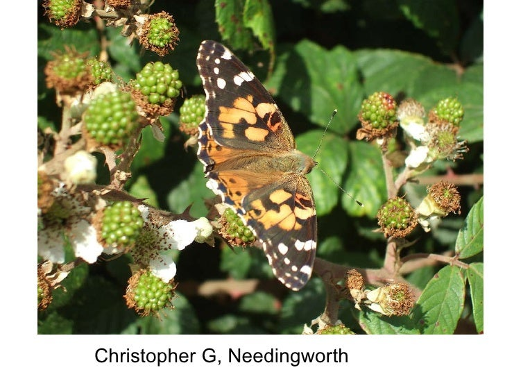 Christopher G, Needingworth