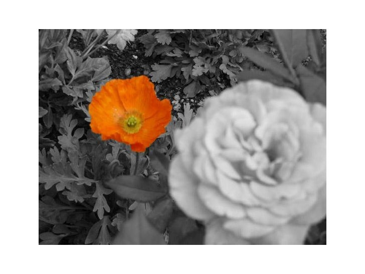 Photo fleur