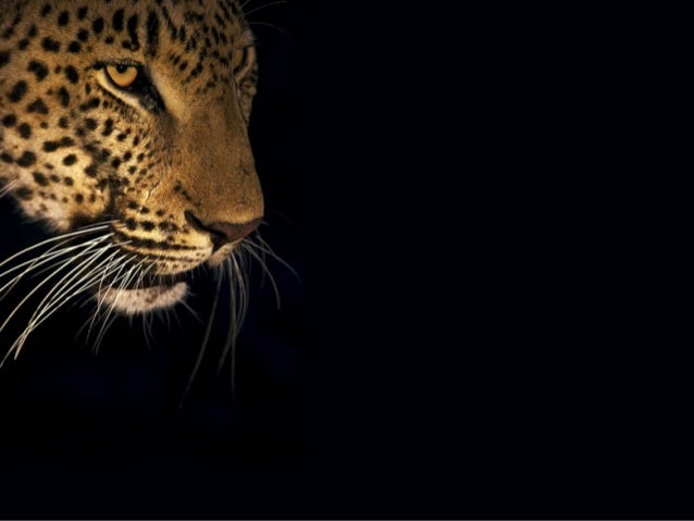 cast            Heinrich van den Berg, South African Wildlife Photographerimages credit   www.Music           Peponi Coldp...