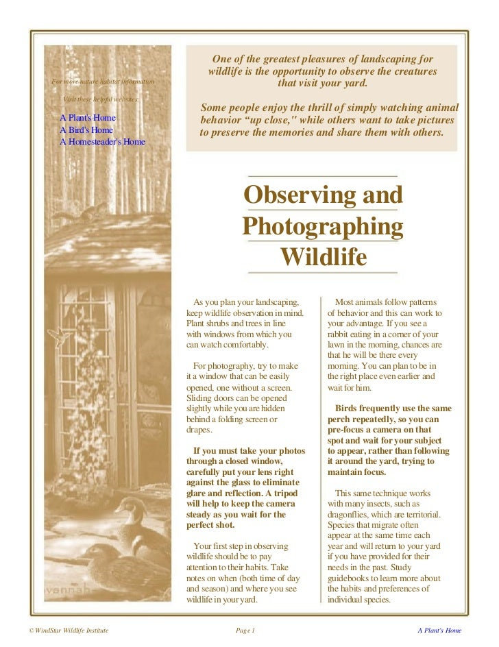 Observing and Photographing Wildlife