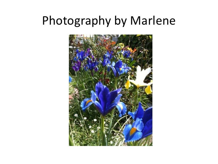 Photography by Marlene<br />