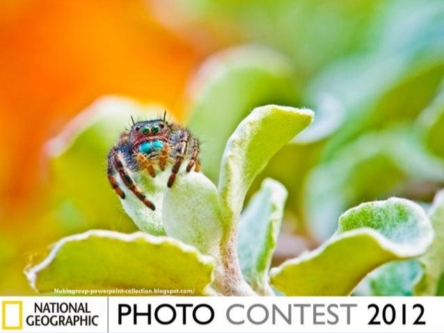 Photos finalistes-au-concours-du-national-geographic-2012