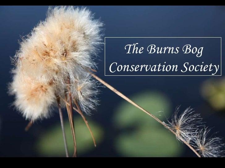 Photo Presentation from Inside Burns Bog