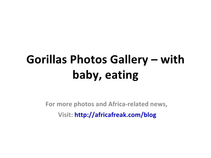 Gorillas Photos Gallery – with         baby, eating   For more photos and Africa-related news,       Visit: http://africaf...
