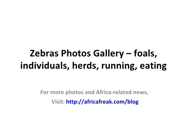 Zebras Photos Gallery – foals,individuals, herds, running, eating    For more photos and Africa-related news,        Visit...