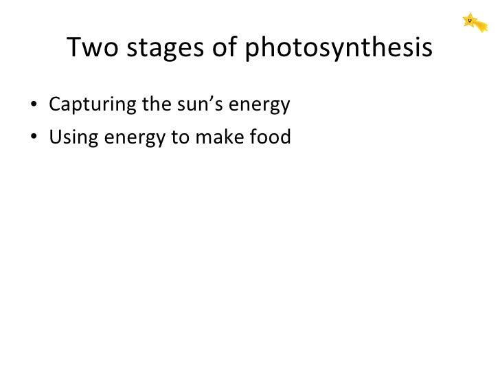 Two stages of photosynthesis <ul><li>Capturing the sun's energy </li></ul><ul><li>Using energy to make food </li></ul>