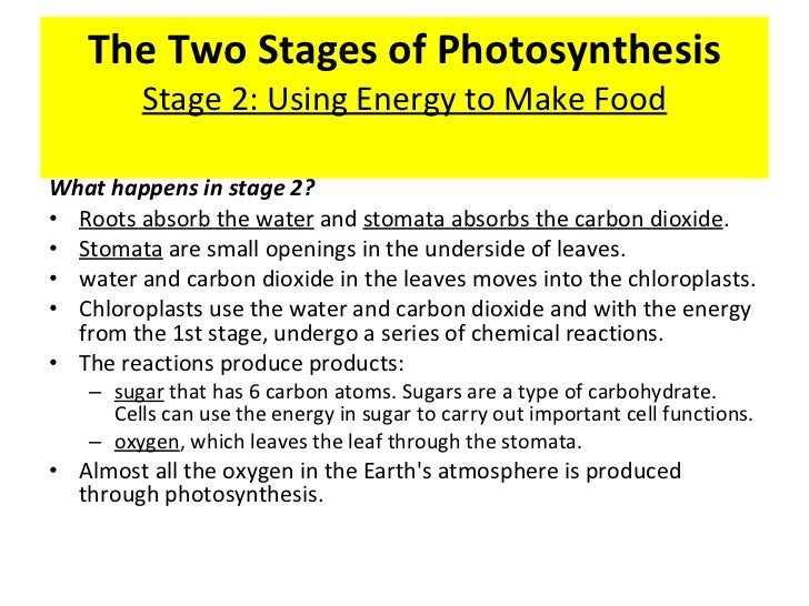 phases of photosynthesis The two phases of photosynthesis the first phase of photosynthesis requires that light fall on the leaf the chlorophyll that is embedded in the membranes of the.
