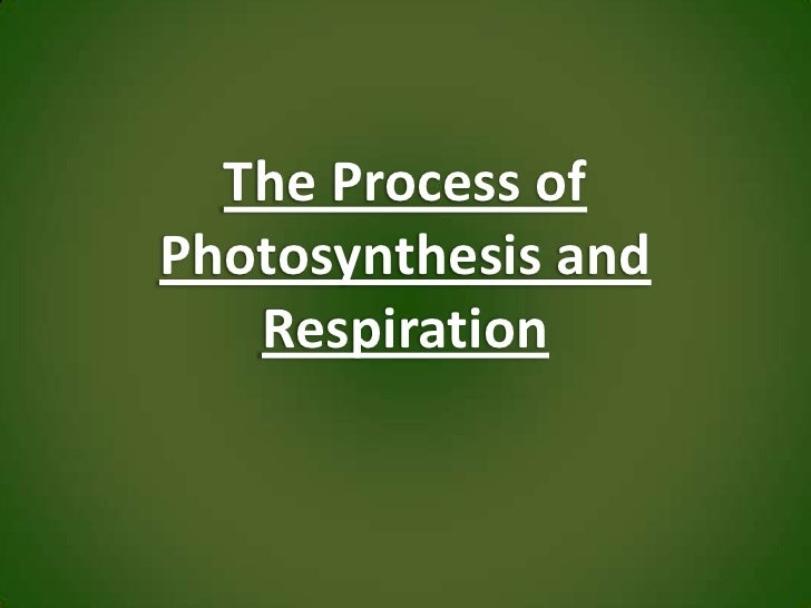 The Process of Photosynthesis and Respiration<br />