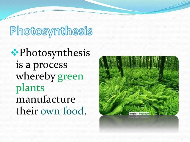 Photosynthesis is a process whereby green plants manufacture their own food.