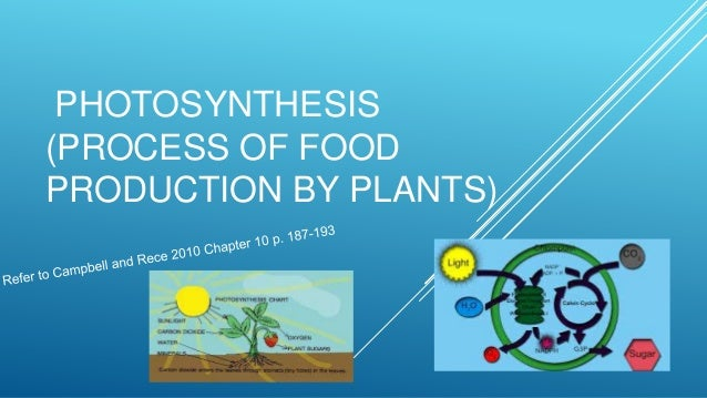 PHOTOSYNTHESIS (PROCESS OF FOOD PRODUCTION BY PLANTS)