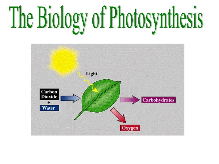 The Biology of Photosynthesis