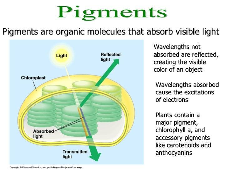 AP Bio Lab 4 - Plant Pigments & Photosynthesis