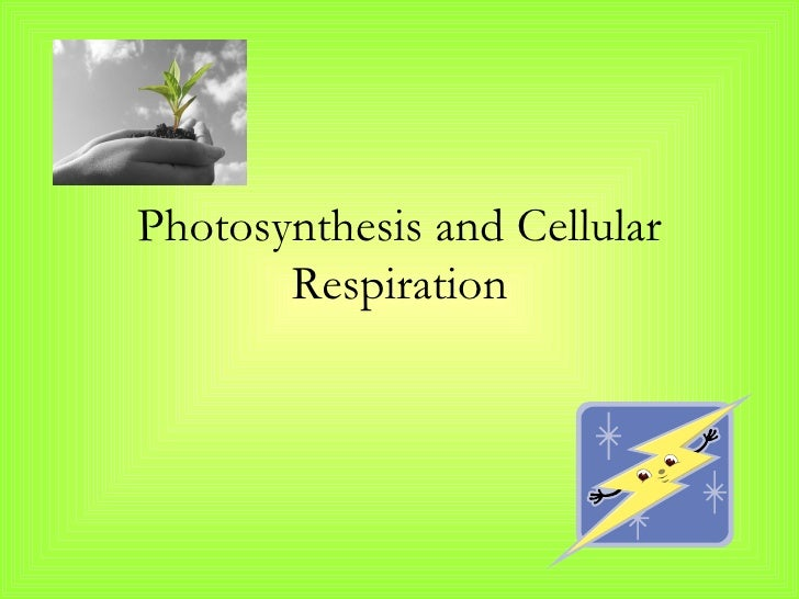 photosythesis and respiration powerpoint