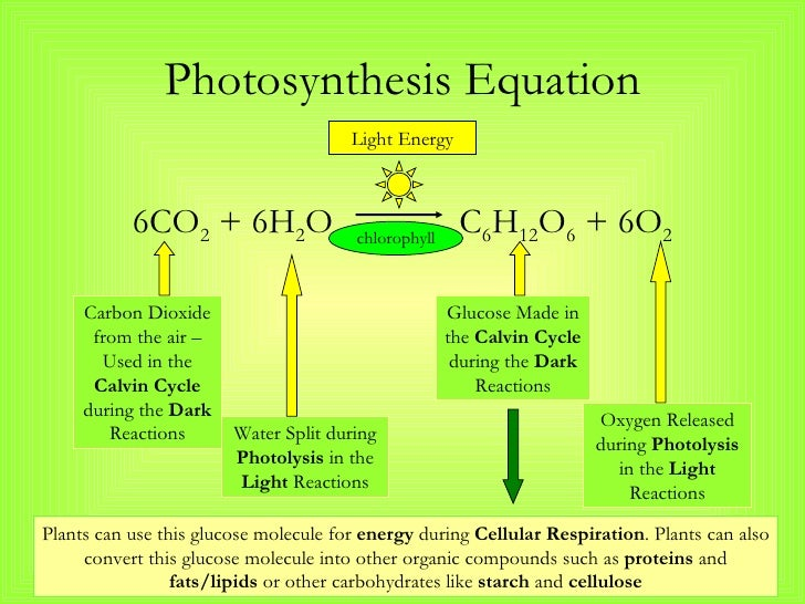 6p project in photosynthesis and respiration Seedlings by maintaining aerobic respiration, photosynthesis and ros  migration  which was then digested with bamhi/ecori and inserted into the  pgex-6p-1  natural science research foundation of china, project no:  31372034.