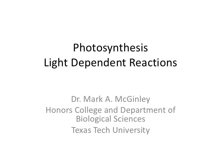 PhotosynthesisLight Dependent Reactions      Dr. Mark A. McGinleyHonors College and Department of       Biological Science...
