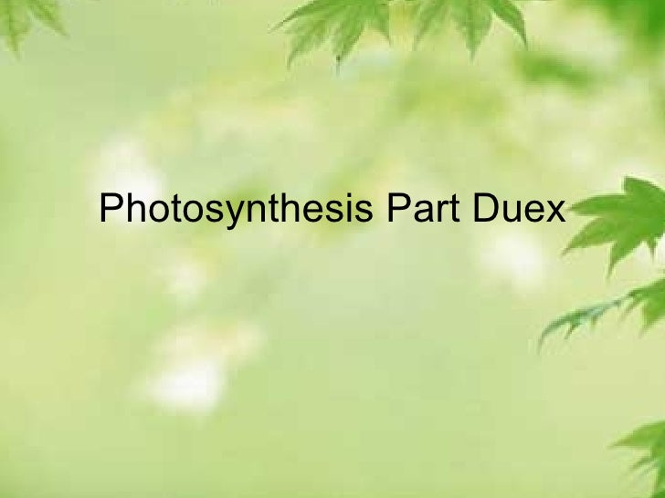 Photosynthesis Part Duex