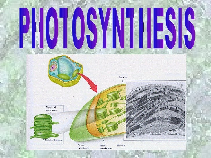Review Question• Which mode of nutrition do the green plants  carry out?A.    Autotrophic nutritionB.    Heterotrophic nut...