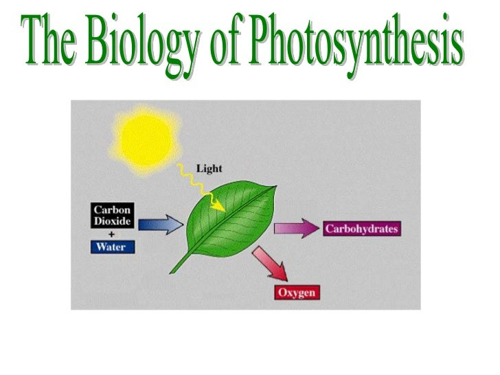 Photosynthesis 2011 - 2012