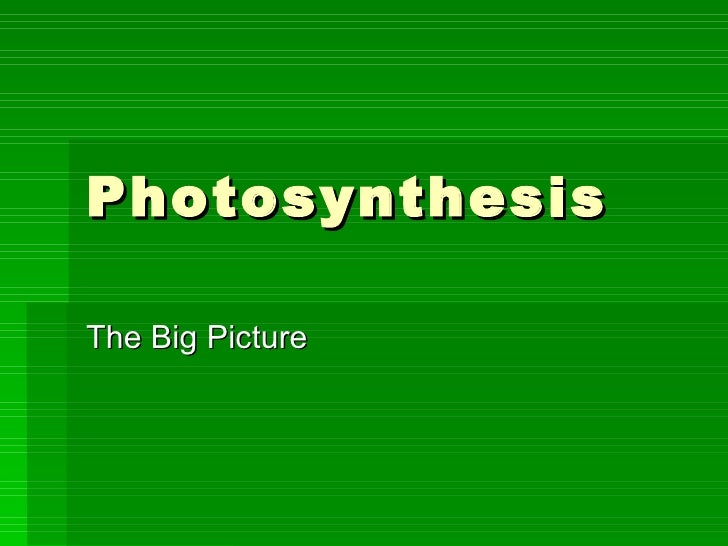 Photosynthesis3