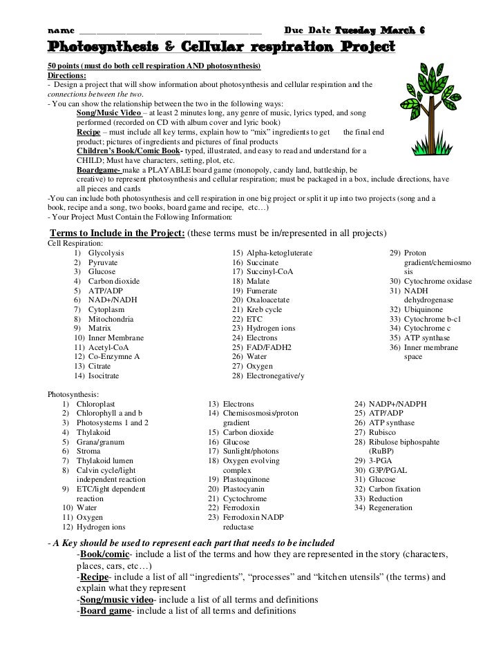 Photosynthesis cellular respiration poster project grading sheet